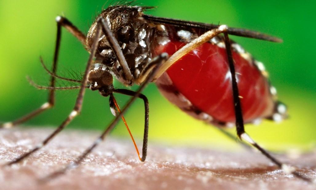 Dengue, Chikungunya e Zica: gente chorando e vendendo lenço